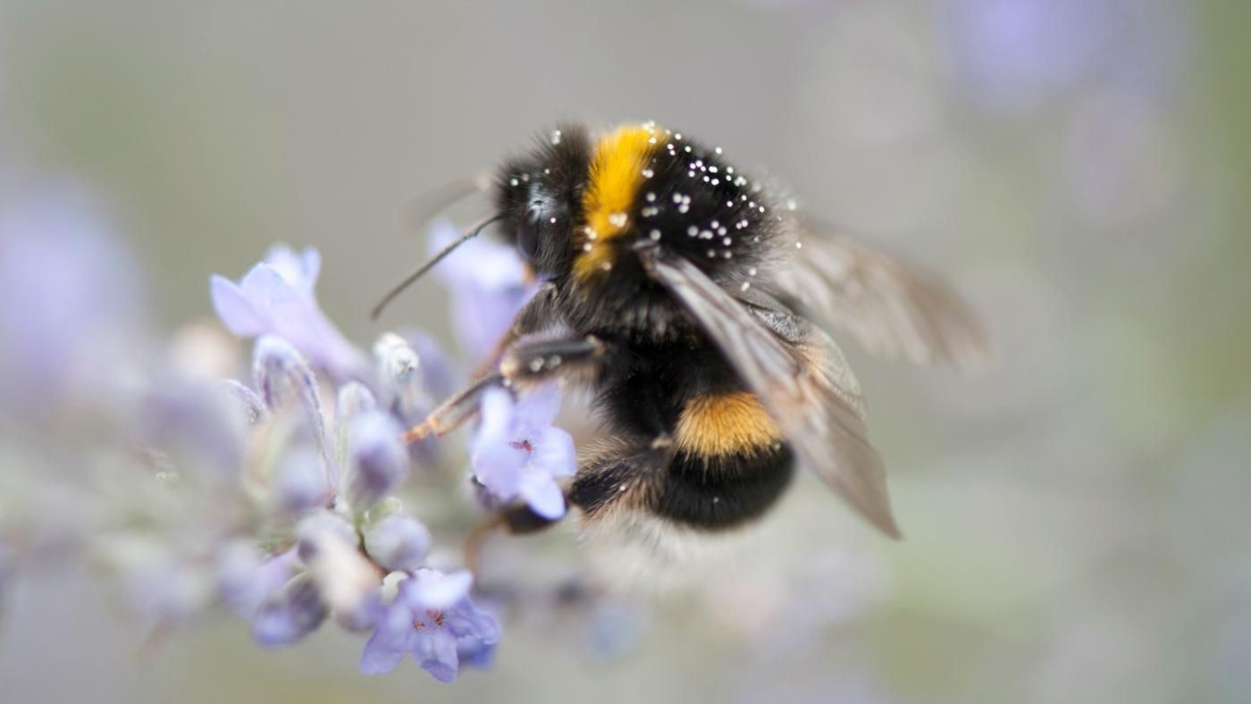 How long does a bee live? Is it possible to save her from death? 83