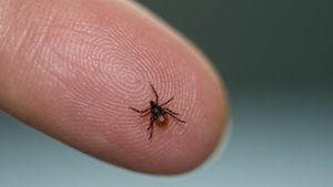 What Is the Right Treatment for Lyme Disease?
