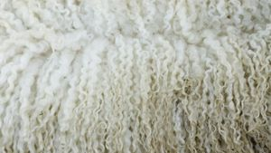 What is pure new wool?