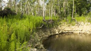 Where can you find sinkholes in Florida?