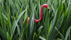 What Are Yard Flamingos?