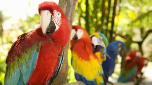 What Are Some Facts About Parrots?