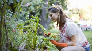 How Do You Start a Vegetable Garden?
