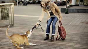 What Are Some Tips on How to Become a Dog Walker?