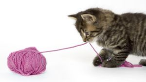 What Is the Cat String Theory?