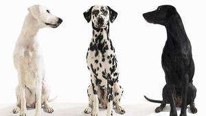 What Is the American Canine Association?