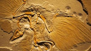 What Is Archaeopteryx Claim to Fame?