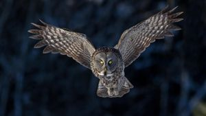 Are Owls Endangered?