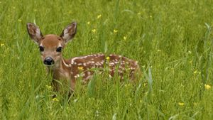 What do baby deer eat?
