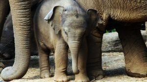 How Does a Baby Elephant Comfort Itself?