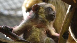 What Are Baby Monkeys Called?