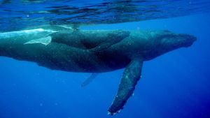 What Are Baby Whales Called?