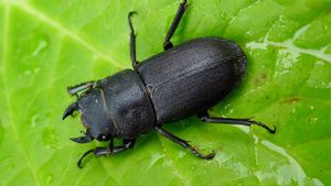 Where Do Beetles Live?