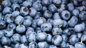 What Are Blueberries Good For?