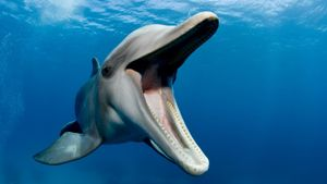 What Do Bottle Nose Dolphins Eat?