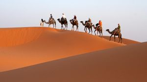 Why Are Camels Called Ships of the Desert?