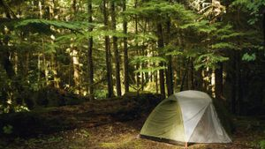 What Are the Camping Options at Hoosier National Forest?