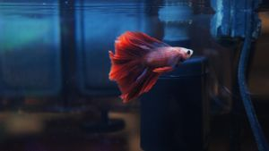 Can Betta Fish Live With Other Fish?