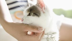 Can Cats Carry Strep Throat?