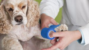 What can I do for my dog's sprained foot?