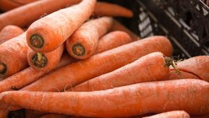 Can Fresh Carrots Be Frozen?