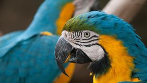 Can You Keep Macaws As Pets?