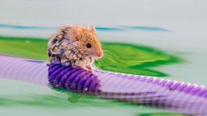 Can mice swim?