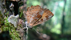 Are There Any Carnivorous Butterflies?