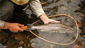 What are characteristics of a good trout net?