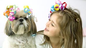How Do You Clip a Shih Tzu?