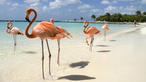 What Country Does Aruba Belong To?