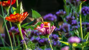 How do you design a hummingbird garden?