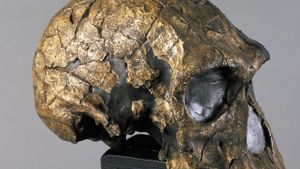 When did Homo habilis live and for how long?