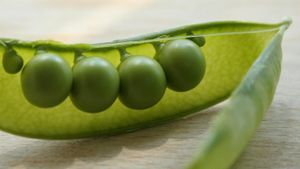 Why Did Mendel Choose Peas for His Experiments?