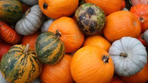 Where Did Pumpkins Come From Originally?