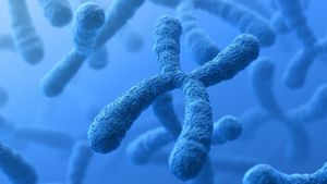 What Is the Difference Between Chromosomes and Genes?