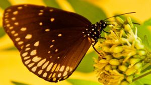 What is the difference between pollination and fertilization?