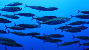 What Is the Different Between Freshwater and Saltwater Fish?