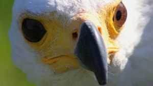 Why Do Different Birds Have Differently Shaped Beaks?