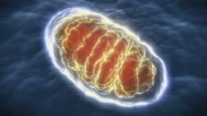 Who Discovered Mitochondria?