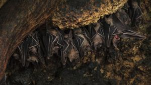 Do bats hibernate and migrate?