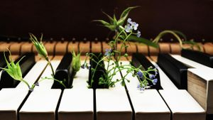 Does Music Help Plants Grow?