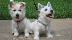 What Is a Dog Grooming Salon?