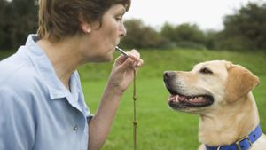 How Does a Dog Whistle Work?
