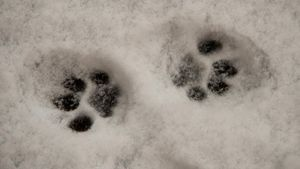 How Do You Draw Cat Paw Prints?