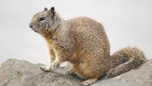What Are Some Examples of Ground Squirrel Bait?