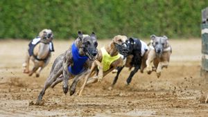 How Fast Do Greyhounds Run?