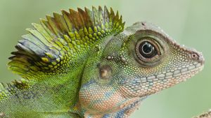 What Do You Feed Lizards?