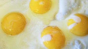 Who Was the First Person to Eat an Egg?