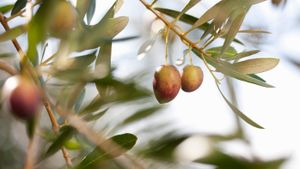 What food group does an olive belong to?